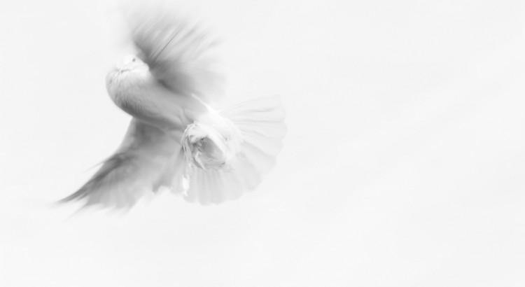 Die Taube als Symbol für den Heiligen Geist